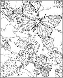 Fairies And Butterflies 3 D Coloring Box By Dover