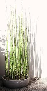 comment planter des bambous dans jardin planting and gardens