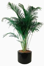 Good Plants For Bathrooms Nz by Adorable Good Plants That Filter Air Home Similiar Good Plants