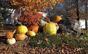 Varieties Of Pumpkins by Fifteen Years Of Breeding Produces New Varieties Of Squash
