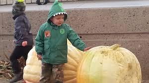 Motleys Pumpkin Patch by Pumpkin Pavilion Saultonline Com