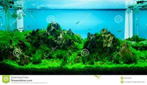Aquascaping Of The Planted Aquarium Stock Photo - Image: 36040278 Out Of Ideas How To Draw Inspiration From Others Aquascapes Aquascaping Aquarium The Art The Planted Plant Stock Photo 65827924 Shutterstock Continuity Aquascape Video Gallery By James Findley Green With River Rocks Aqua Rebell Qualifyings For 2015 Maintenance And Care Guide Outstanding Saltwater Designs 2012 Part 1 Youtube Dennerle Workshop Fish