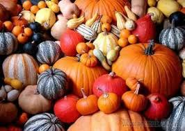 Pumpkin Patch Houston Tx Area by 16 Best Frightful Halloween Attractions In Houston Images On