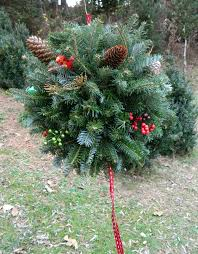 Christmas Tree Names by Pardue Tree Farm U0026 Nursery