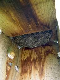 how to get rid of wasp nest in roof best image voixmag