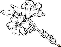 Iris Coloring Pages