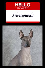 Do Hypoallergenic Dogs Still Shed by What Is The Most Hypoallergenic Dog Dog Vills