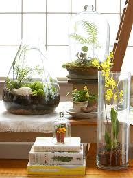 Pot Plants For The Bathroom by Top Plants For Terrariums