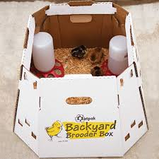 Outpak Backyard Brooder Box - 12 Chicks | QC Supply Chicken Brooder Box For Sale Australia With My New I Built The Raising Baby Chicks Without A Hen First 6 Weeks Outpak Backyard 12 Qc Supply Yes You Certainly Can Brood Outdoors Backyard Chickens Online Buy Whosale Chick When To Move From Coop Outside Ikea Inspired Poultry Forum Fresh Eggs Daily 8 Boredom Busters For Advice Box Simple And Efficient With Pictures