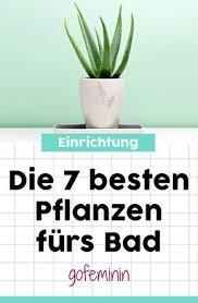 diese 7 pflanzen wachsen im bad am besten