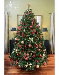The 9ft Arbor Vitae Fir Tree