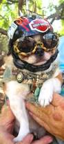 Baton Rouge Halloween Parade 2015 by 47 Best Pet Costumes Images On Pinterest Costume Ideas Pet