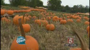 Boulder Creek Pumpkin Patch by Shuckles Corn Maze At Fiddle Dee Farm Youtube