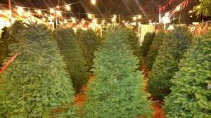 Pasadena Pumpkin Patch Nl by Pasadena Christmas Trees 16 Photos U0026 41 Reviews Christmas