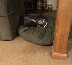 Unchewable Dog Bed by Large Round Dog Bean Bag Bed Bean Bags R Us Dog Beds And Costumes