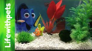 Spongebob Aquarium Decor Amazon by How To Set Up A Betta Fish Tank Two Basic Planted Tanks Setups