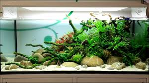 White Sand With Green Plants Freshwater Aquarium | Tank ... Images Tagged With Aquascape On Instagram Aquatic Eden Aquascaping Aquarium Blog Aquascape Pinterest How Much Does It Cost To Run A Fish Tank Tropical Site 20 Of The Most Beautiful Places On Planet This Is Why You Can Natural Httpwwwokeanosgrombgwpcoentuploads2012 Takashi Amano Creator Of The Nature Love Aquascapenl Twitter Hardscape Axolotl Fish And Aquariums Planted Red Green By Adrian Nicolae Design