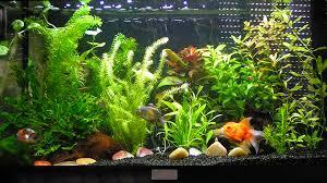 poisson geneve petit poisson eau douce aquarium vrac it
