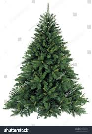 Silvertip Fir Christmas Tree by Bare Christmas Tree Without Decoration Stock Photo 128995391
