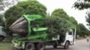 A Truck-Mounted Claw Pulls Up Trees By The 15,000-Pound Root Balls Baumalight Nomad Tree Spades 100 For Chase Farms Youtube Cqm Series Pick Up Truck Mounted Hydraulic Trsplantertree Trees By Brady Bennett Winchester Wi Spade And Truckingdepot Premier Equipment Rentals Skidsteer Four More Favorite Northern Virginia Shade Surrounds 60 Bobcat 1991 Gmc Sierra 3500 Pickup Truck With Tree Spade Item Dc0