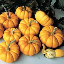 Pumpkin Patch Columbus Ga by Pumpkin Patch In Stockbridge Georgia The Pumpkin Patch At Yule Forest