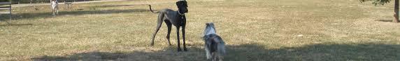 Old Westbury Gardens Dog Halloween by Events U2022 Li Dog