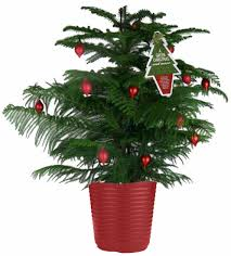 Christmas Tree Aphids by Little Potted Trees Won U0027t Thrive In The Ground Albuquerque Journal
