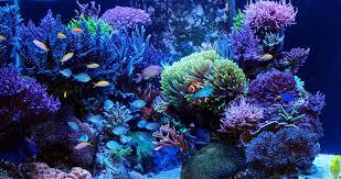 aquarium d eau douce trucs et astuces pour démarrer aquarium d eau de mer