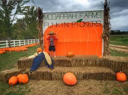 Pumpkin Patch Fayetteville Arkansas by Aetn Chef Talk U2014 U201ccook With Brooks Country Pumpkins U201d