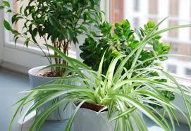 pflanzen im wohnbereich welche grünpflanzen sind geeignet