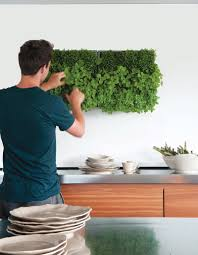 so können kräuter in der küche das ganze jahr wachsen