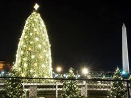 The 9 Biggest Brightest Christmas Trees In America