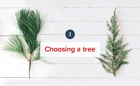 Best Type Of Christmas Tree by How To Take Care Of Your Christmas Tree Proflowers Blog