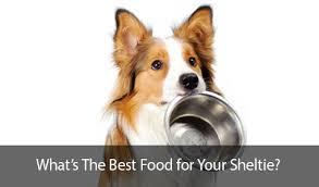 Sheltie Shedding Puppy Coat by How To Groom A Shetland Sheepdog