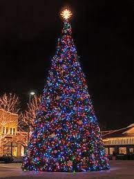 Plantable Christmas Trees Columbus Ohio by For Many Vancouverites The Lighting Of The Christmas Tree Outside