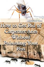 Best 25 Kill carpenter ants ideas on Pinterest