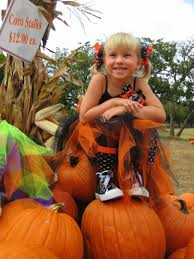 Pumpkin Patch Austin Texas 2015 by Great Hill Country Pumpkin Patch Love Creek Orchards