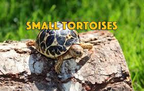 Flukers Turtle Clamp Lamp by Smalltortoises Tortoise For Sale Baby Tortoise For Sale Buy