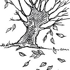 autumn leaf outline 8 pics of dogwood leaf coloring page tree fall leaves coloring fall leaf