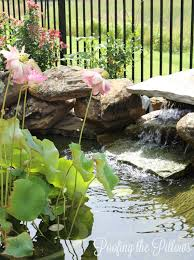 Loving And Caring For Our Backyard Pond | Poofing The Pillows Garnedgingsteishplantsforpond Outdoor Decor Backyard With A Large Fish Pond And Then Rock Backyard 8 Small Ideas Front Yard Ponds Backyards Wonderful How To Build For Koi Loving And Caring For Our Poofing The Pillows Project Photos Ideasnhchester Rockingham In Large Bed Scanners Patio Heater Flame Tube Beautiful Classical Design Garden Well Cared Indoor Waterfall Eadda Lawn Style Feat Artificial 18 Best Diy Designs 2017