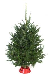 Fraser Fir Christmas Trees North Carolina by Hart T Tree Farms Wholesale