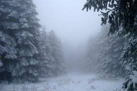 Pinery Christmas Trees by Winter Tag Wallpapers Page 17 Beautiful Lights Sky Winter Forest