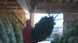 Christmas Tree Farms In Boone Nc by Ind Christmas Tree Farm Sells The Experience Not Trees Agweb Com
