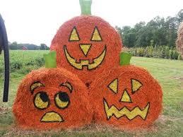 Big Orange Pumpkin Patch Celina Texas by Big Orange Pumpkin Farm In Celina Texas Pumpkin Farm And Texas