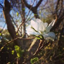 White Flower Along Old Coach Track Ohakune New Zealand