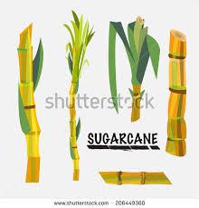 Sugar Cane Clipart 38