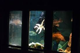 Underwter viewing Picture of Oregon Undersea Gardens Newport