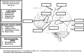 Human Brain Diagram Labeled Viewing Gallery