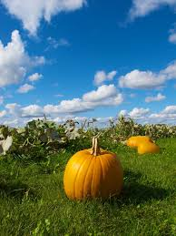 Lakeview Pumpkin Patch by Pumpkin Patches Cnyfresh