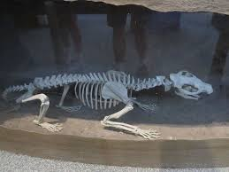 Agate Fossil Beds National Monument by Fossil Of A Bear Dog Picture Of Agate Fossil Beds National